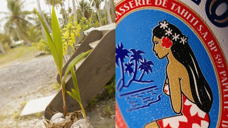 Left: Coconut sprouting. Right: Hinano, 'the beer of Tahiti'