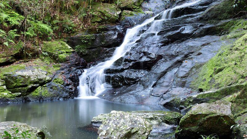 The cooling waters of Kondalilla Falls