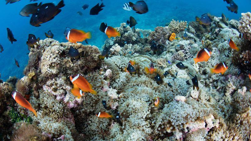 Fiji's coral reefs are a magnet for divers