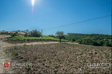 Tuscany - WINE ESTATE WITH APARTMENT FOR SALE IN GROSSETO, TUSCANY