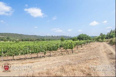 Tuscany - WINE ESTATE FOR SALE IN THE TUSCAN MAREMMA, GROSSETO