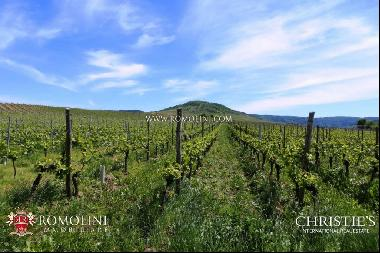 Tuscany - WINERY FOR SALE IN MONTALCINO, 3 HECTARES OF BRUNELLO VINEYARDS