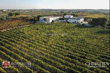 Apulia - ORGANIC VINEYARDS AND WINERY FOR SALE IN BARI, ITALY
